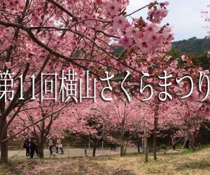 伊勢志摩サミット開催記念!第11回横山さくらまつりが開催されます!